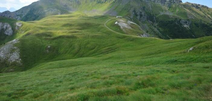 Alpe di Pampeago bei Predazzo